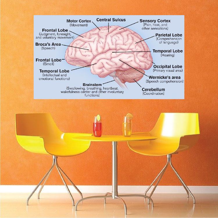 Brain Wall Mural Decal