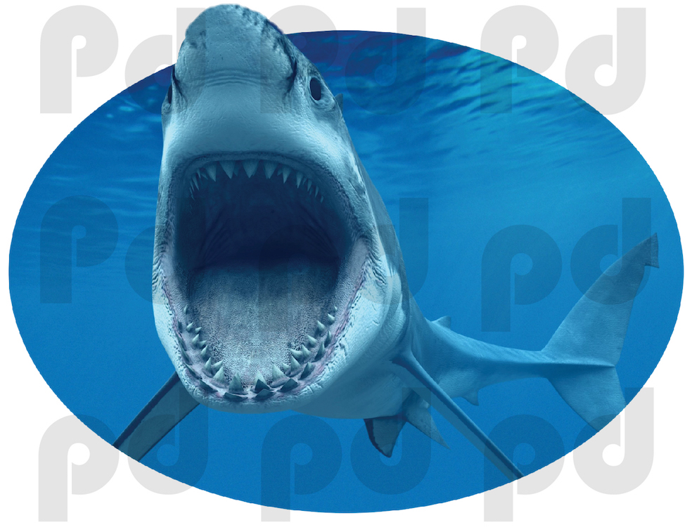 shark wall mural decal oceans wall decal murals graffiti art graffiti artist for hire graffiti artists