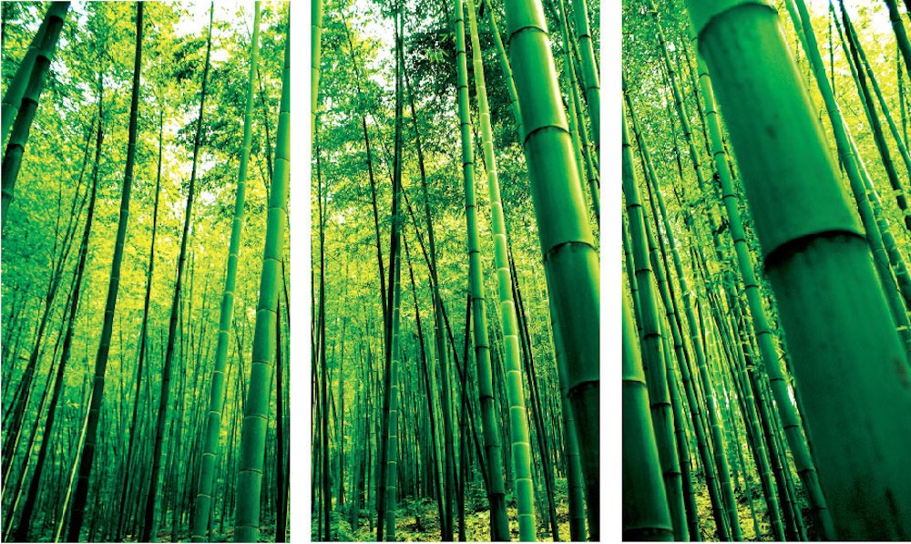 bamboo mural decal view wall decal murals primedecals