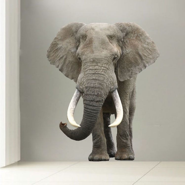 Elephant Wall Mural Decal Animal Wall Decal Murals
