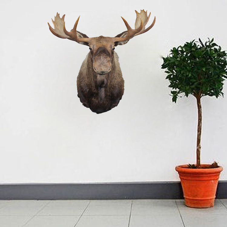 Top Moose Head Wall Decal - Animal Stickers - Primedecals TC04