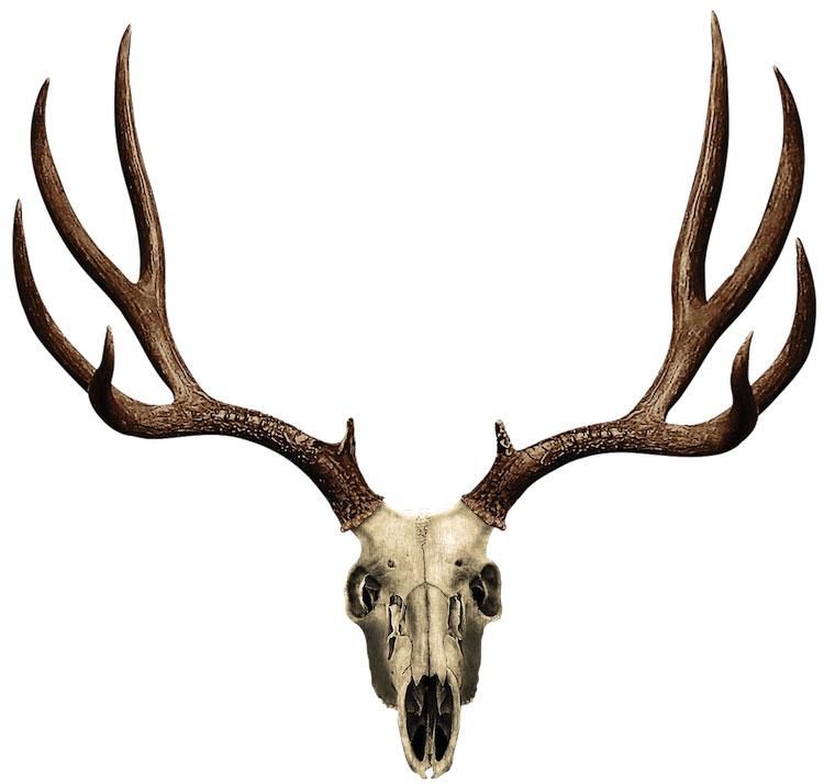 Antler moose