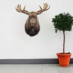 Moose Head Wall Decal