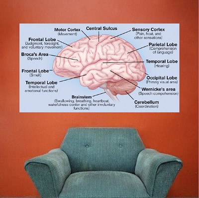 Brain Wall Mural Decal