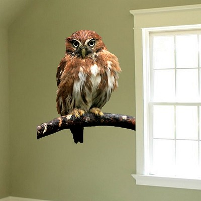 Owl Wall Decal Mural